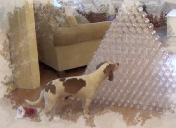 Dog-Gets-210-Bottles-For-Christmas-tuttacronaca