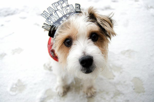 dog-happy-new-year-tuttacronaca