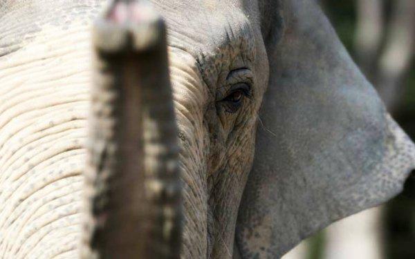 elefante-gra-roma-tuttacronaca