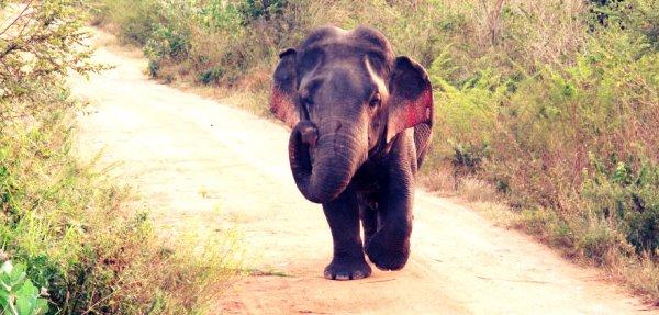 elefante-nano-tuttacronaca