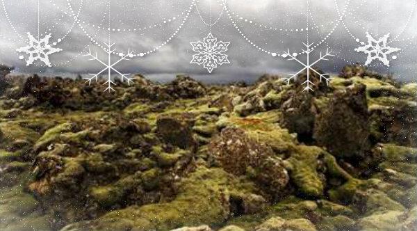 elfi-tuttacronaca