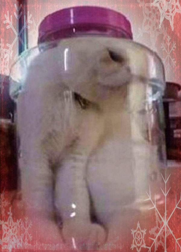 gatto-nel-barattolo-tuttacronaca