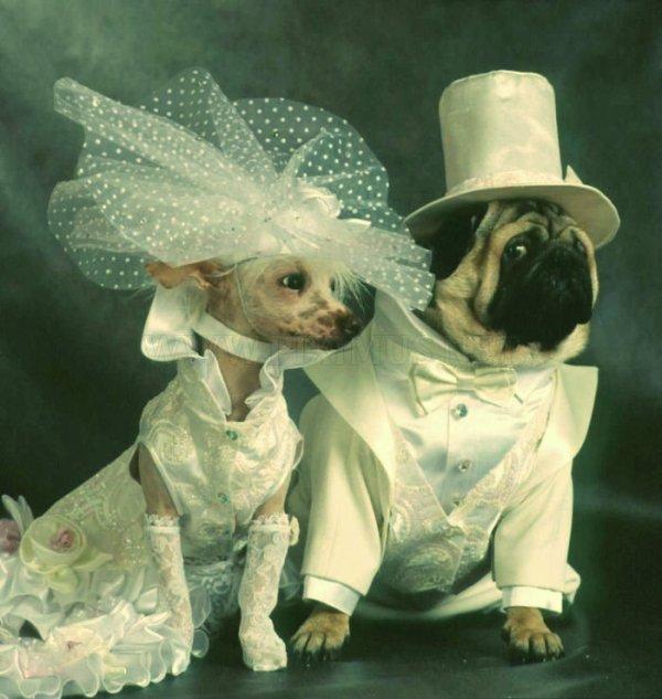 matrimonio-specie-diverse-tuttacronaca