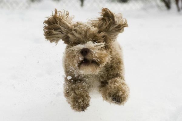 neve-meteo-tuttacronaca
