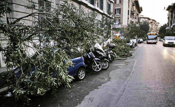 tuttacronaca-maltempo-roma-vento-albero