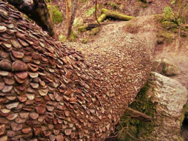 albero_monetine-tuttacronaca