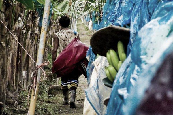 banane-piantagioni-tuttacronaca
