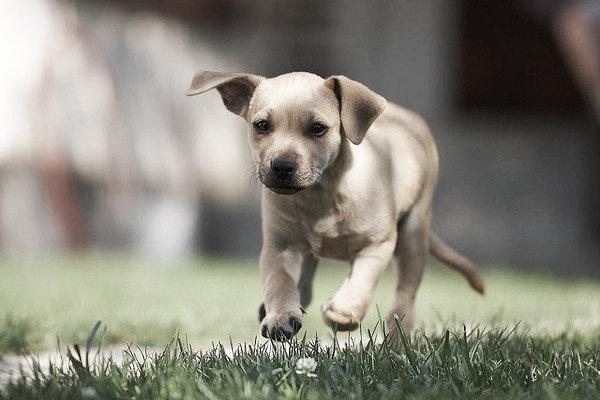 cagnolino-tuttacronaca
