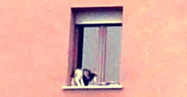 cane-finestra-tuttacronaca