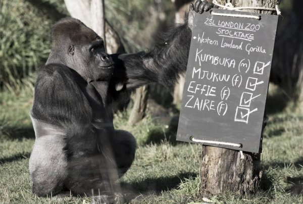 censimento-zoo-londra-tuttacronaca