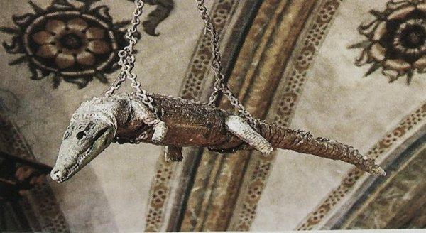 coccodrillo-tuttacronaca-padova