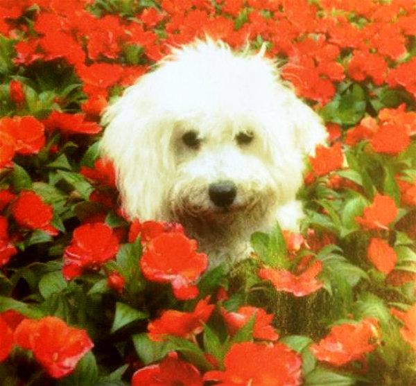 dudu-fiori-tuttacronaca