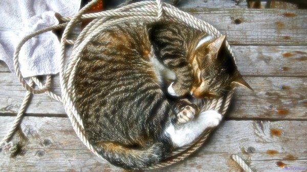 gatto-barca-tuttacronaca