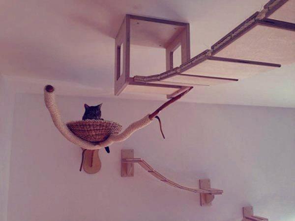 micio-cesta-tuttacronaca