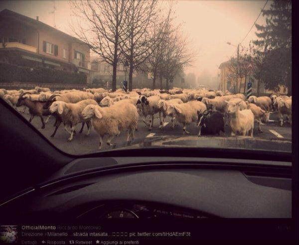 montolivo-milanello-pecore-tuttacronaca