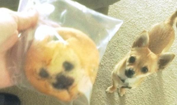 muffin-chihuahua-tuttacronaca