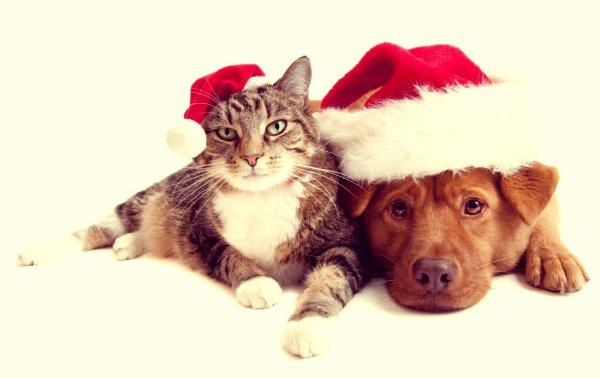 Natale-foto-cane-e-gatto-tuttacronaca