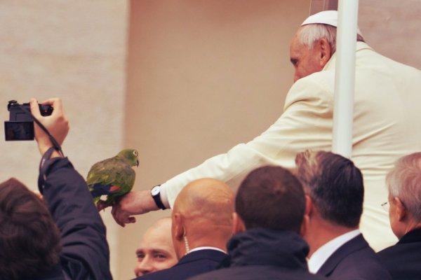 papa-pappagallo-tuttacronaca
