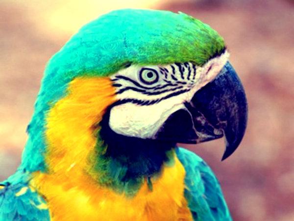 pappagallo-parlante-tuttacronaca