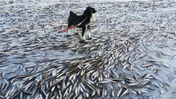 pesci-ghiacciati-tuttacronaca