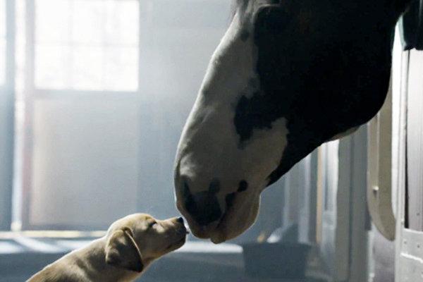 puppy-love-tuttacronaca