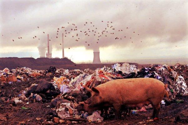 reato-ambientale-tuttacronaca
