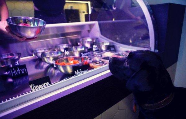 ristorante-cani-gatti-tuttacronaca