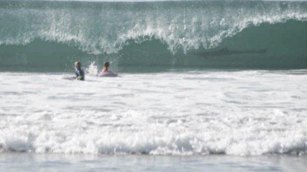 squalo-tuttacronaca