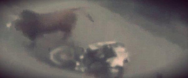 Toro-motociclista-tuttacronaca