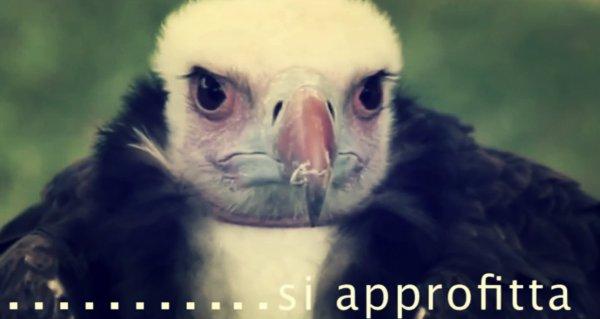 avvocati-avvoltoi-tuttacronaca