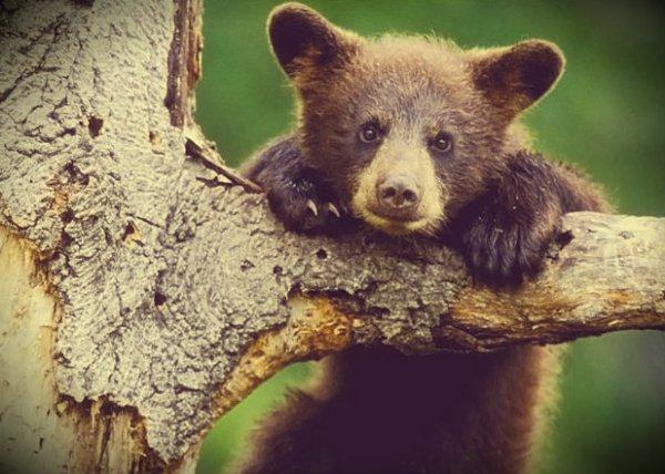 baby-bear-tuttacronaca