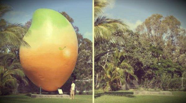 big-mango-tuttacronaca
