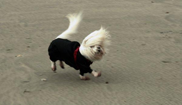 cane-impavido-vento-tuttacronaca