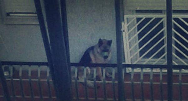 cane-terrazzo-tuttacronaca