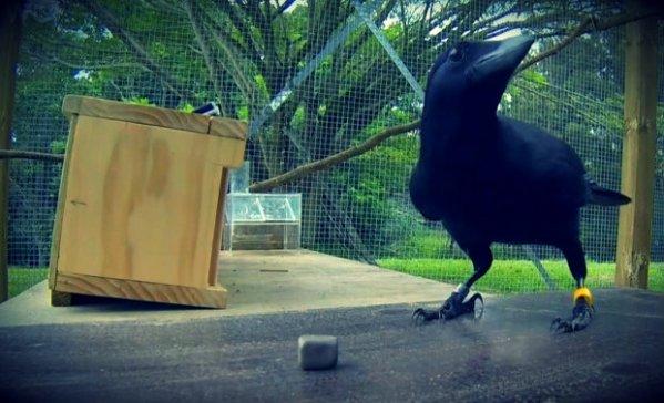 corvo 007-tuttacronaca