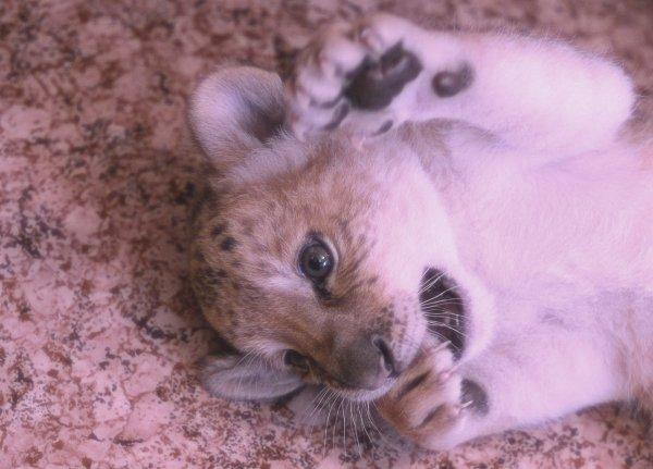 cute-baby-liliger-tuttacronaca