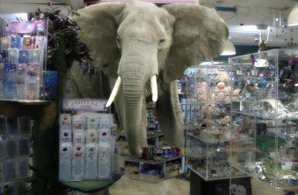 elefante-cristalleria-tuttacronaca