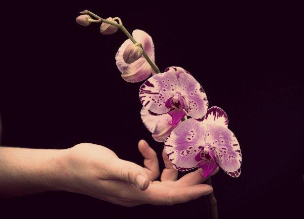 festival-delle-orchidee-kew-garden-londra-tuttacronaca
