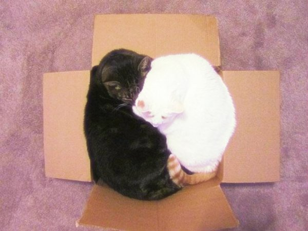 gatti-tuttacronaca- acrobazie