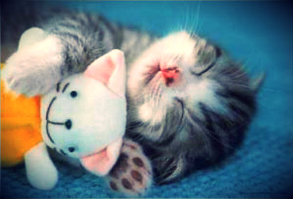 gatto-tuttacronaca