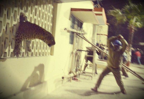 leopardo-ospedale-tuttacronaca