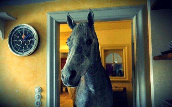 nadar-cavallo-casa-tuttacronaca