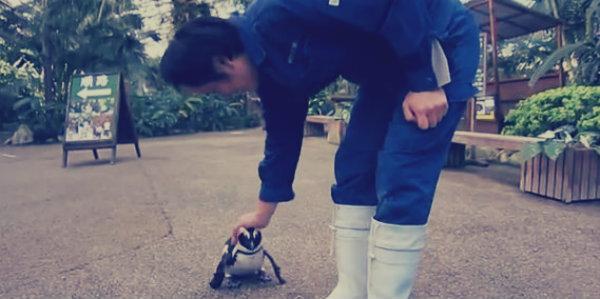 pinguino-innamorato-tuttacronaca