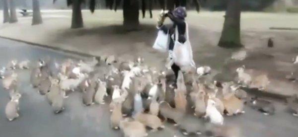 regina-conigli-tuttacronaca