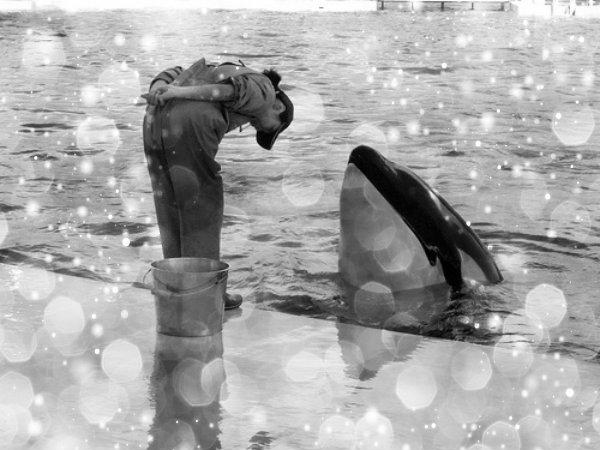 respect-whale-tuttacronaca