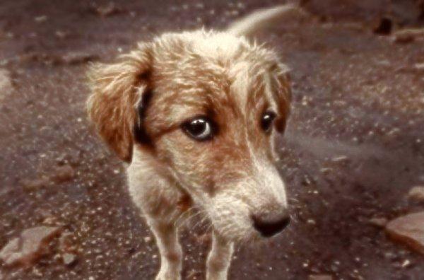 rom-truffa-cani-randagi-tuttacronaca