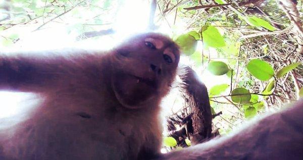 scimmia-selfie-tuttacronaca