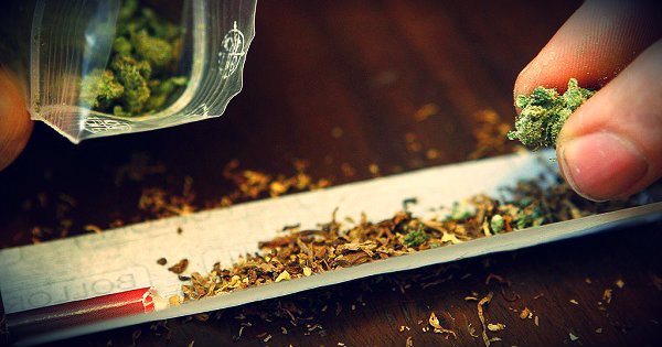 spaccio-marijuana-tuttacronaca