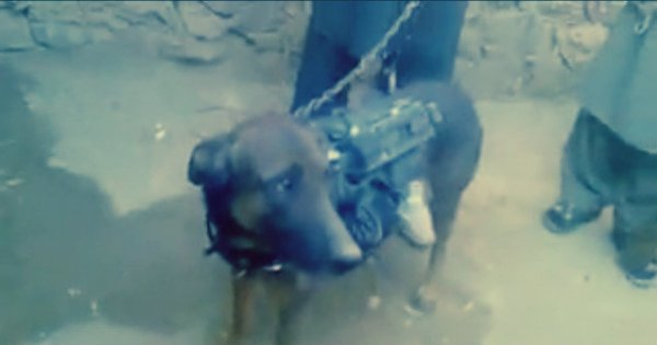 taliban-captive-dog-tuttacronaca