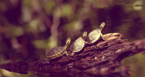 tartaruga-lentezza-tuttacronaca